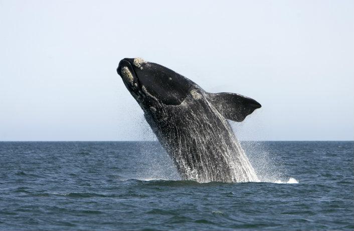 baleineOK
