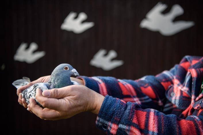 pigeonBON