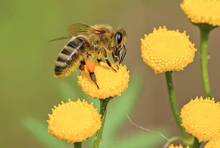abeilleBOn
